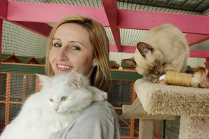 Cat Care Professionals in Melbourne – Cattery Australia