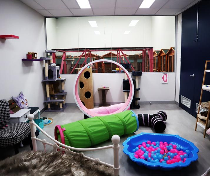 Cat Accommodation Cost in Australia, Cat Boarding Prices ...